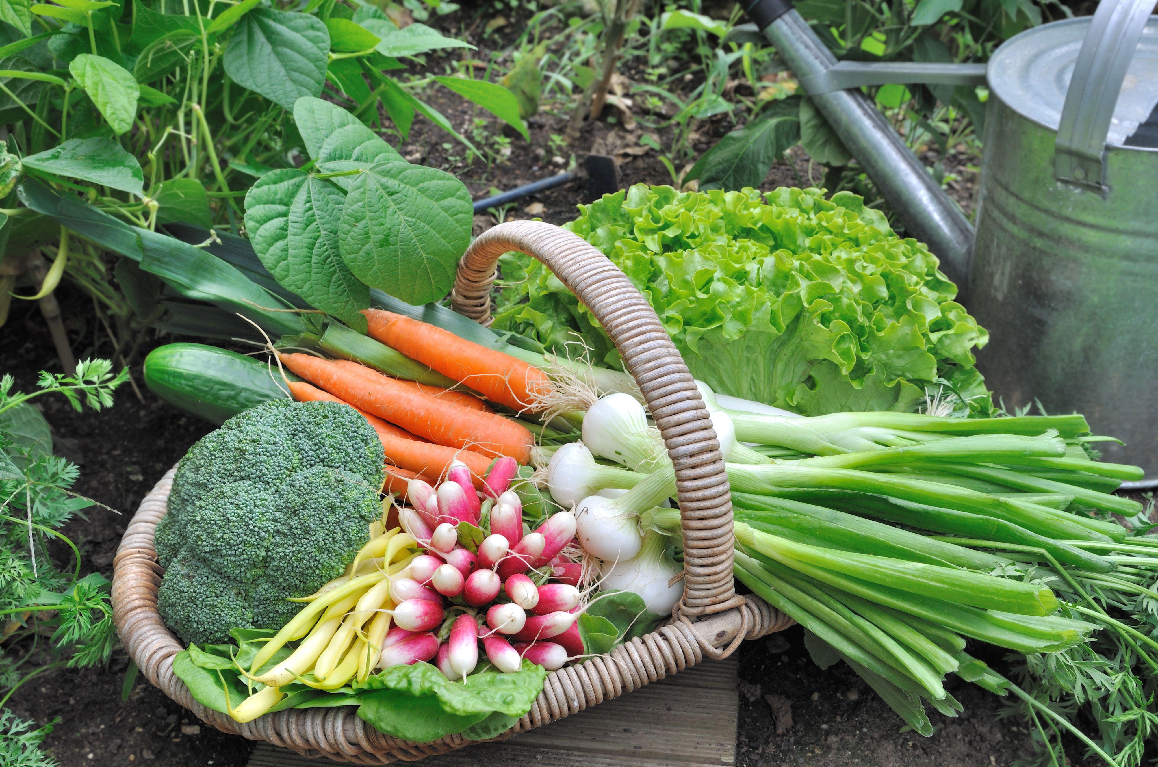 vegetable garden  77