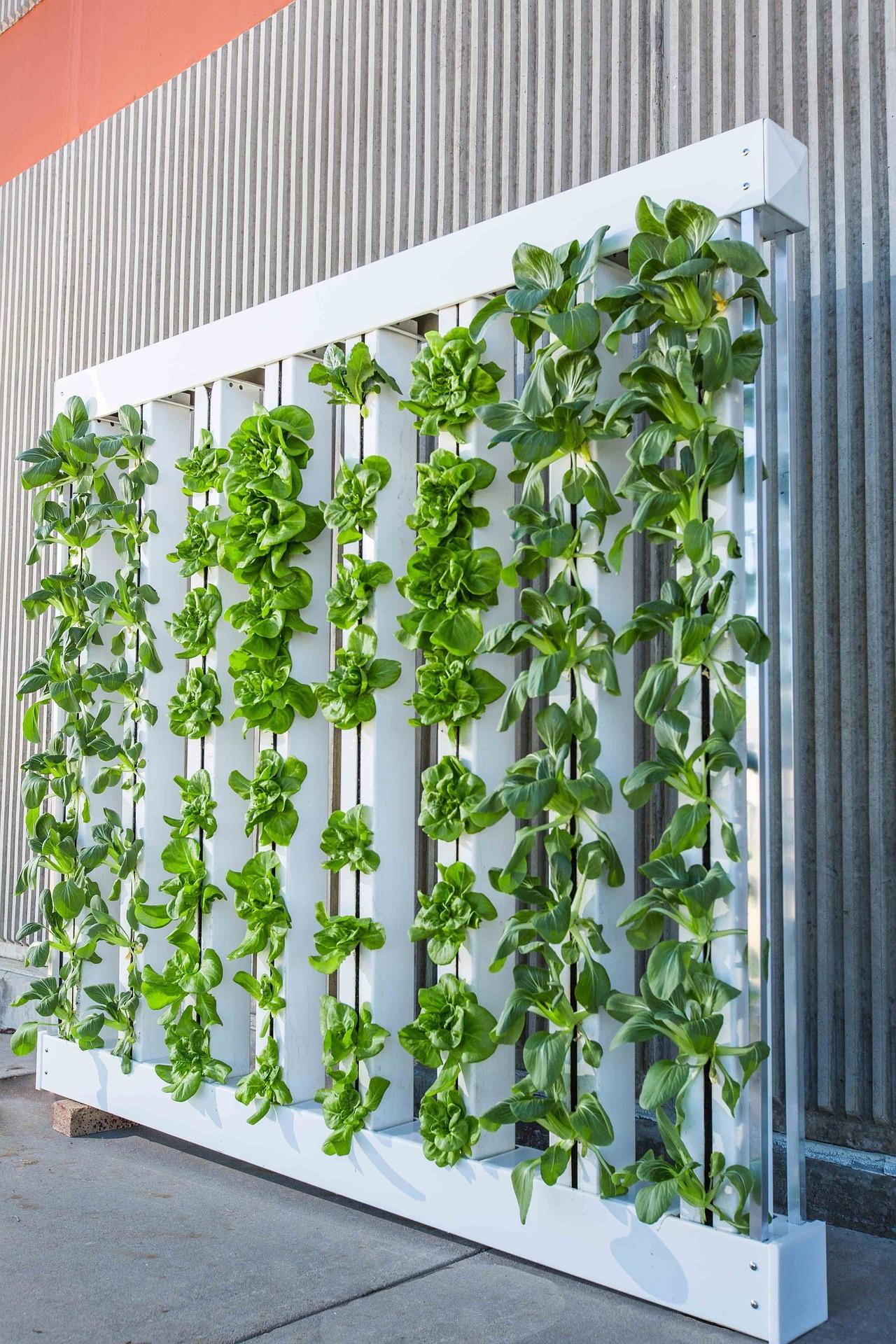 vertical gardening  74