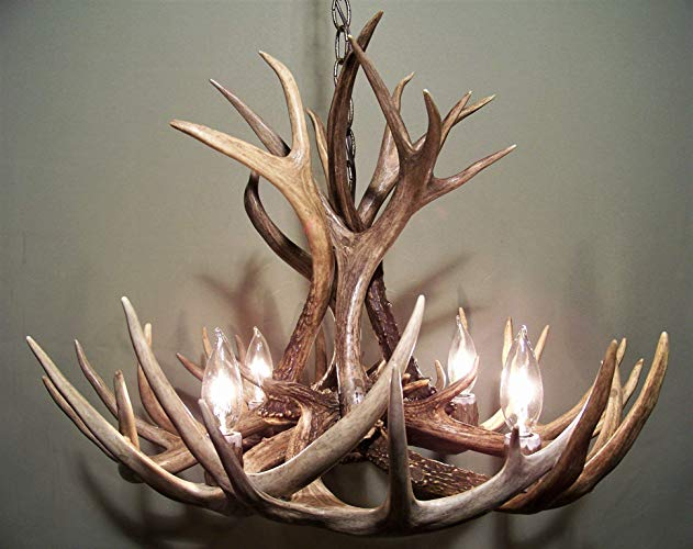 Amazon.com: REAL ANTLER CHANDELIER, WHITETAIL & MULE DEER COMBO, 12