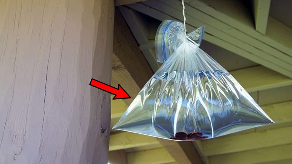 Plastic bag How to get rid of flies outside?  Easy to use ideas
