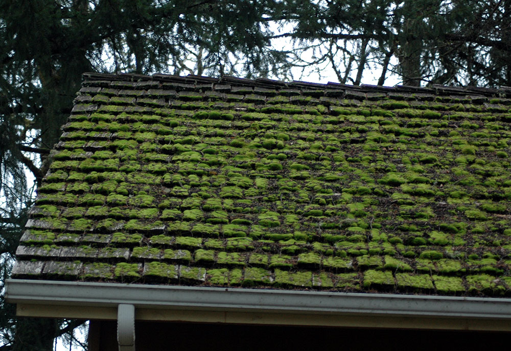 moses How to remove moss from the roof in a natural way