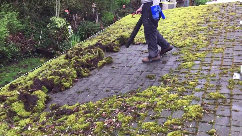 moos2 How to remove moss from the roof in a natural way