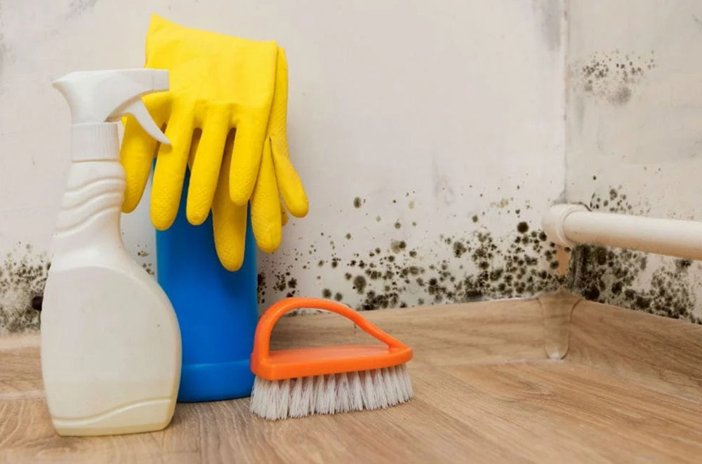 Bleaching agents How to get rid of cellar smell?  Quick tips to get it done