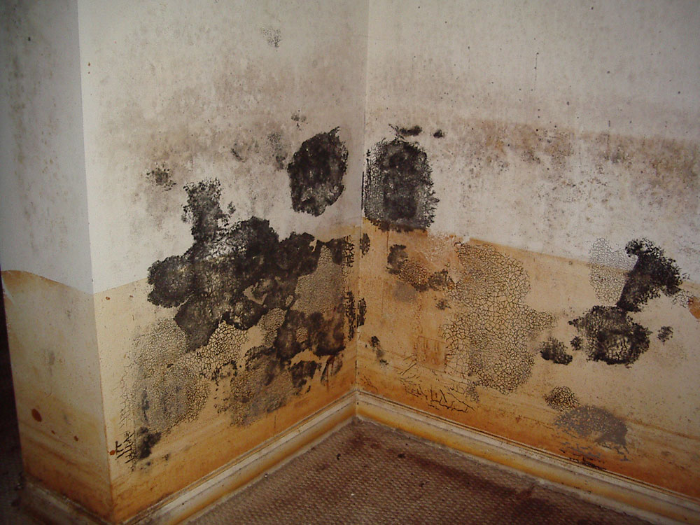 Mold removal How much does foam insulation cost?  (Replied)