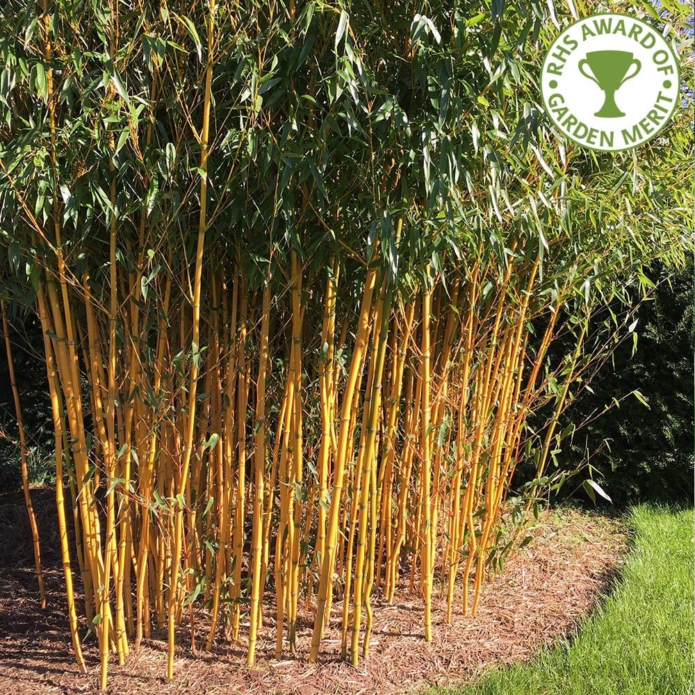 t2-158 The different types of bamboo you should know