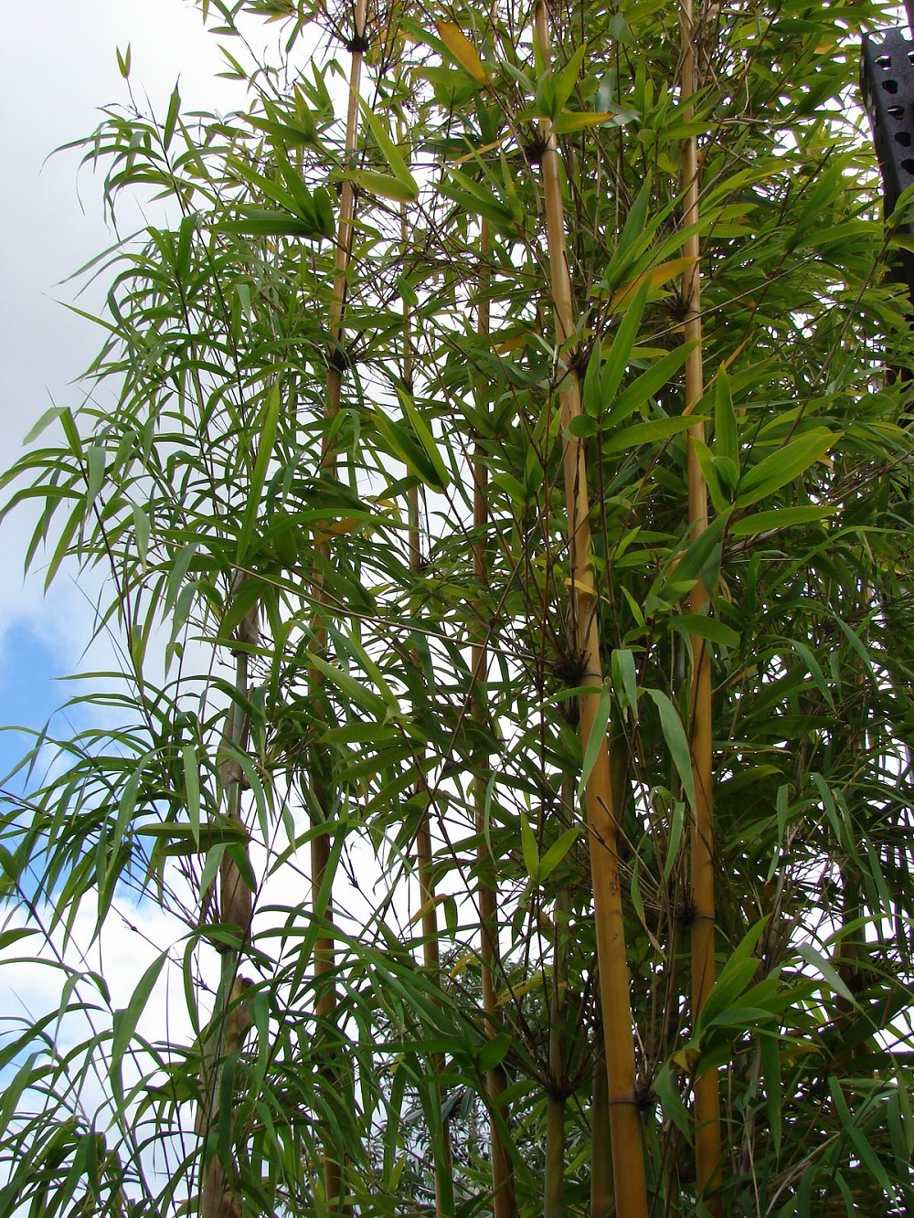 t3-106 The different types of bamboo you should know