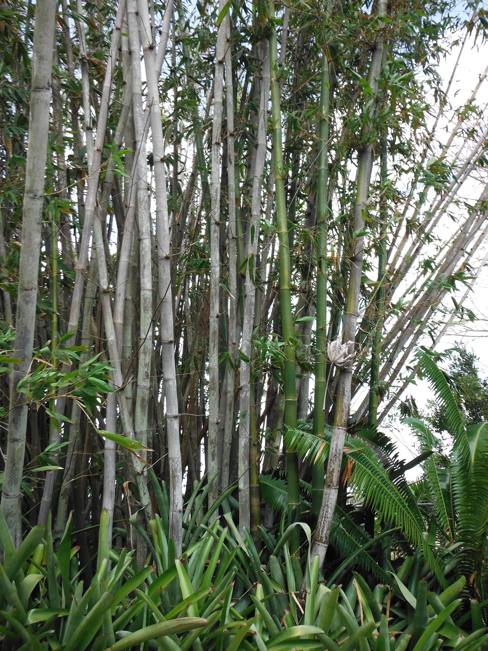 t3-98 The different types of bamboo you should know