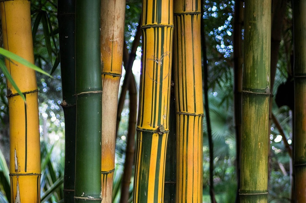 t3-101 The different types of bamboo you should know