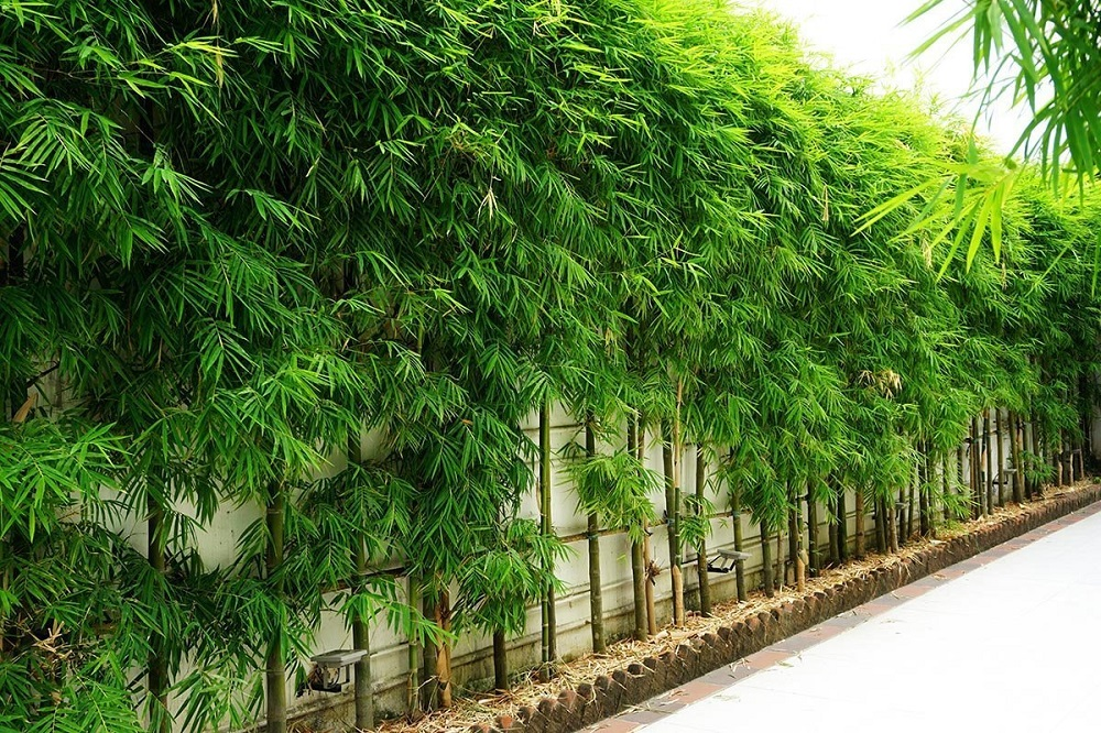 t3-102 The different types of bamboo you should know