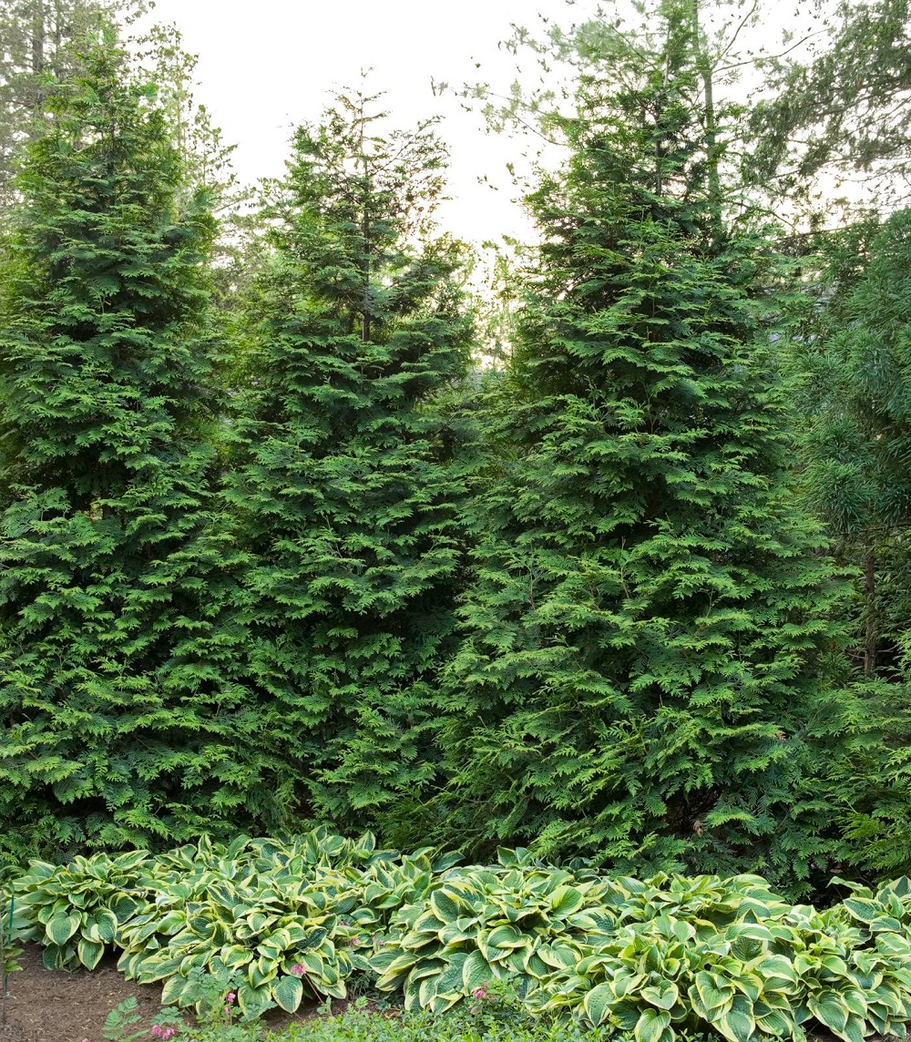 t3-29 Fast growing plants that can be used near your home