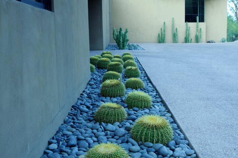 t4 Amazing ideas for cactus gardens that you can try out for your garden