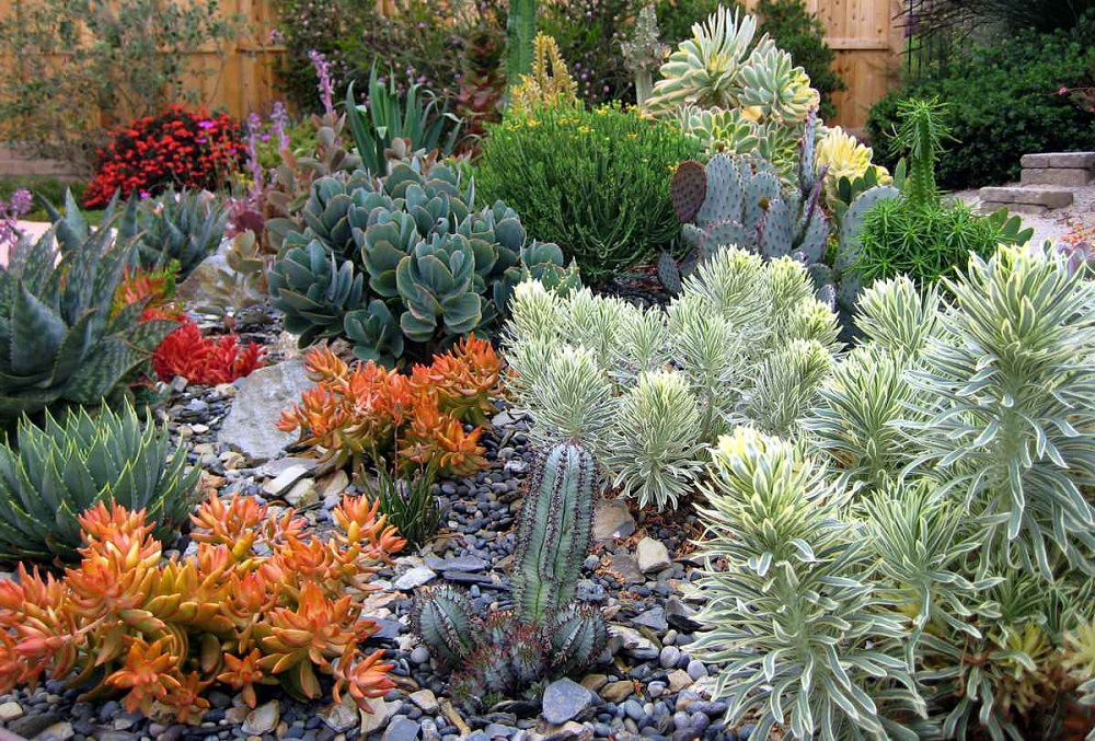 t3 Amazing ideas for cactus gardens that you can try out for your garden