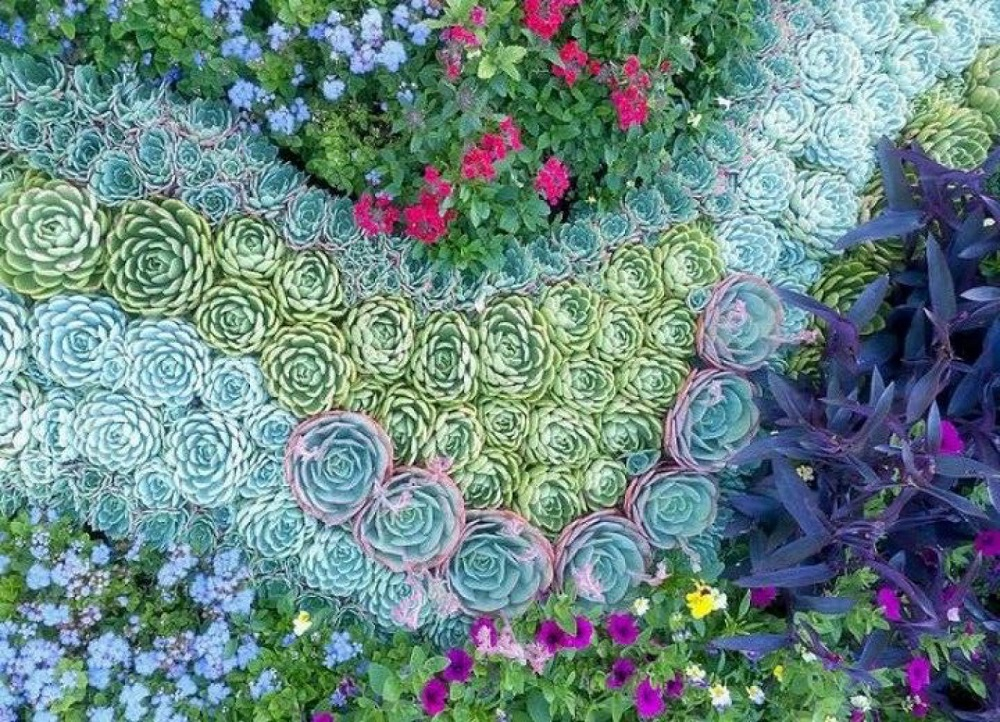 y5 Amazing cactus garden ideas to try out for your garden