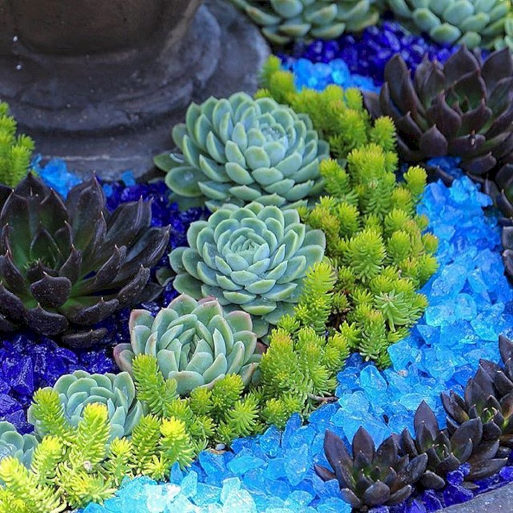 t4-1 Amazing cactus garden ideas to try out for your garden