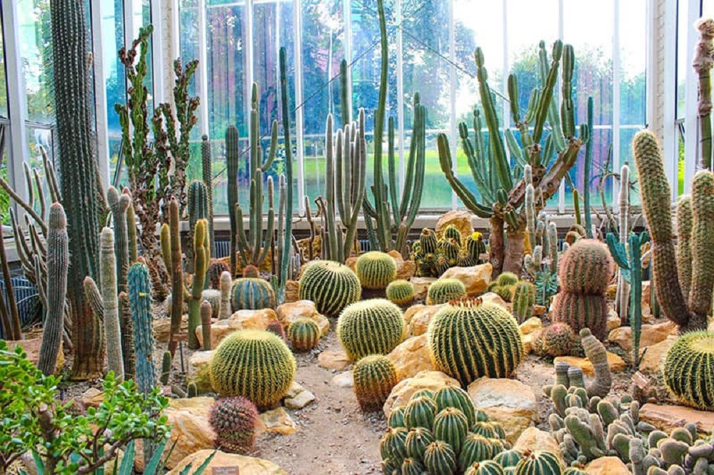 t5-1 Amazing cactus garden ideas to try out for your garden