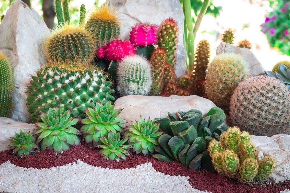 t5-2 Amazing cactus garden ideas you can try out for your garden
