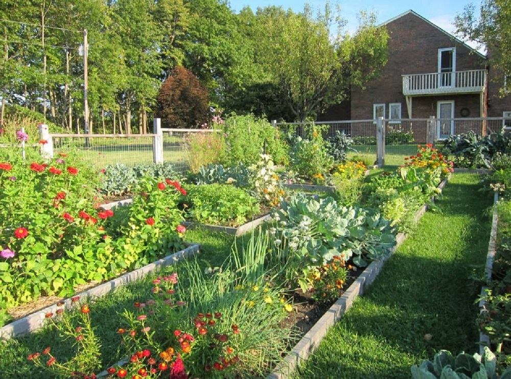 pix3-6 ideas for garden fences that are practical and also look good