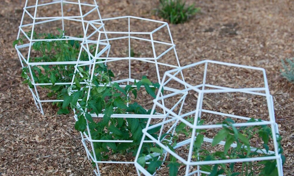 Quinn_sculptural_modern_tomato_cage_TerraTrellis_ed118940-ae9b-42f2-af8b-5ca6d8da4993-1-1000x600 ideas for garden grids that are inexpensive and look great