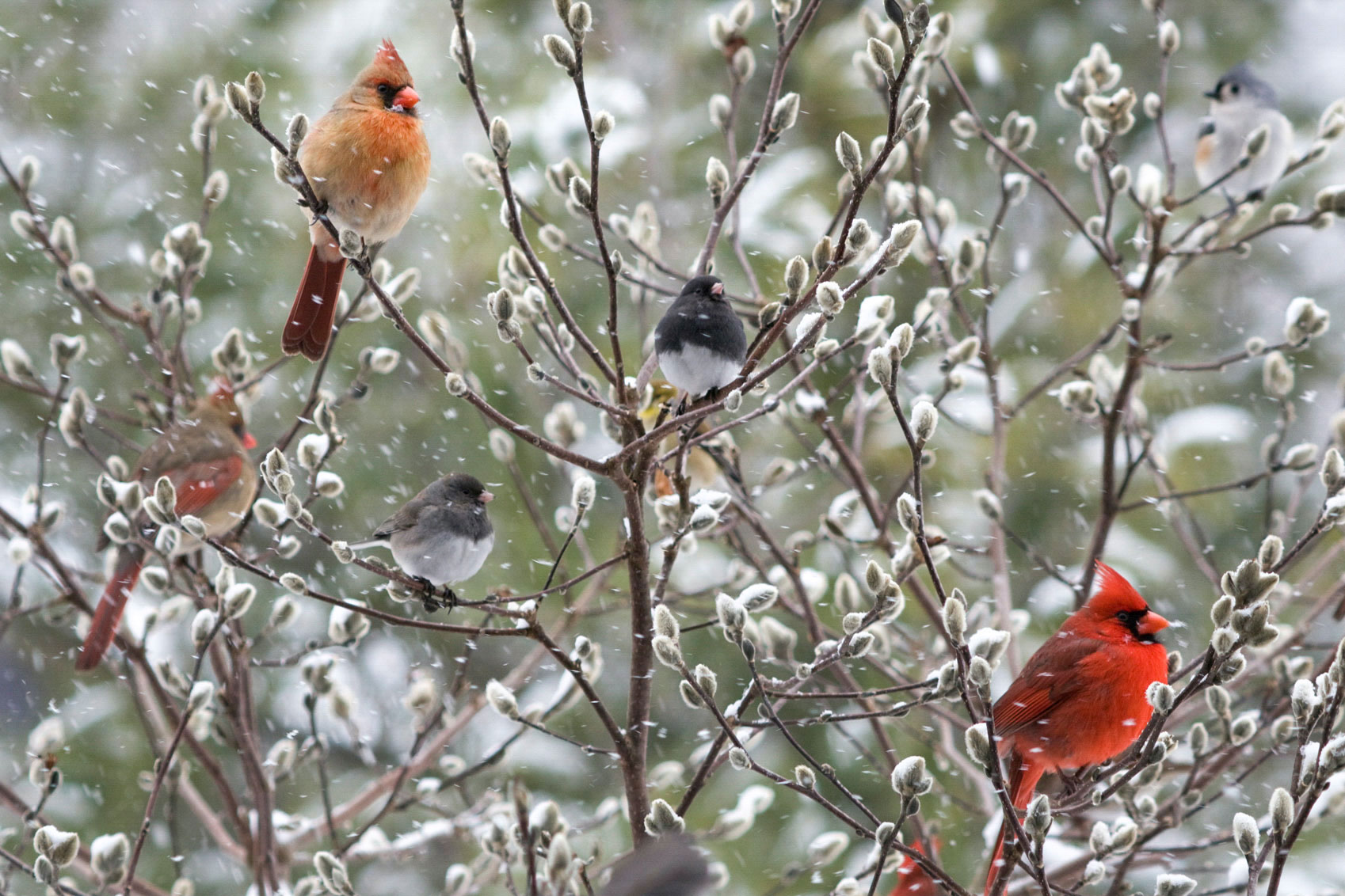 welcome11 How To Dress Cardinals In The Back Yard Of Your Home (Great Tips)