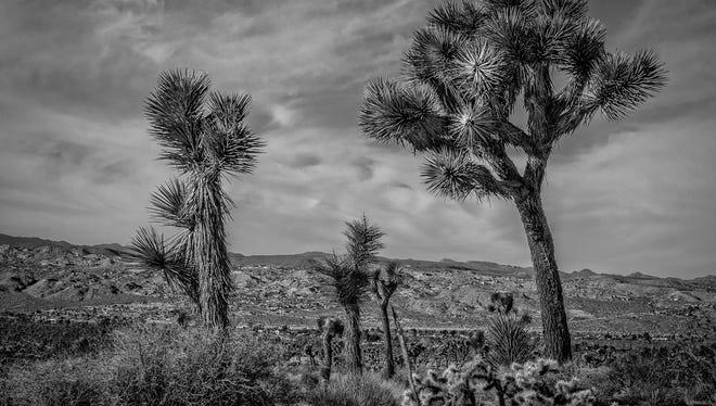 California desert artists offer poetry, prose, essays on beau