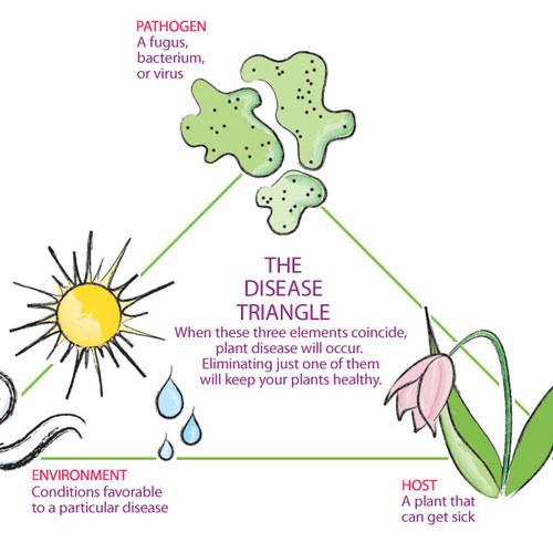 10 Ways to Keep Your Garden Healthy - FineGardeni