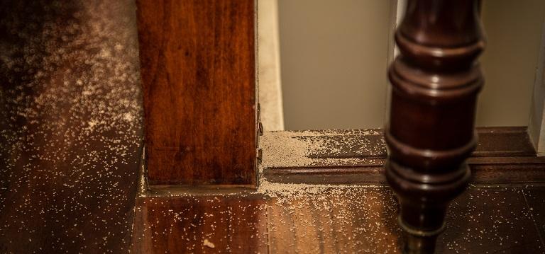 10 Signs of a Termite Infestation - Ask Mr. Litt