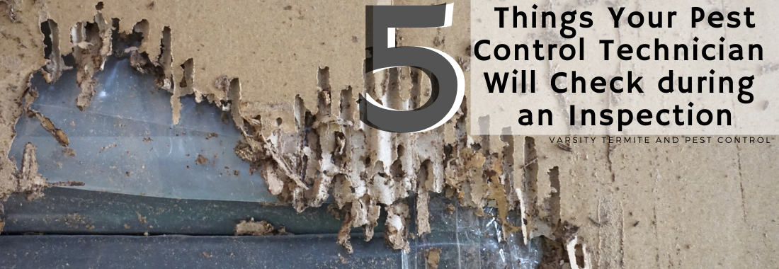 5 Things Your Pest Control Technician Will Check during an Inspecti