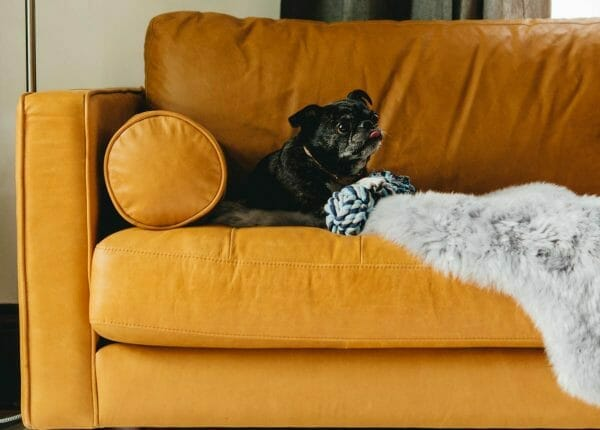 5 Tips For Choosing Pet-Friendly Furniture | Articula