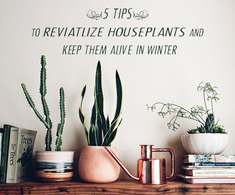 5 Tips to Revitalize Houseplants (and Keep Them Alive in Winter .