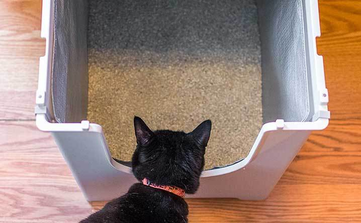 7 tips to make a stinky litter box smell fresh & clean. - Modk