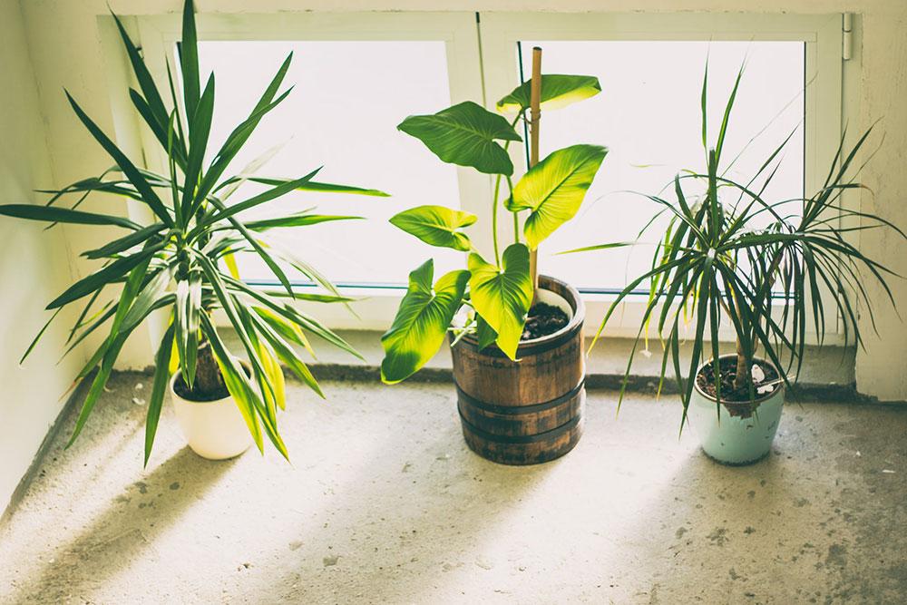 pexels-photo-1173650 Essentials that you should definitely consider for your indoor garden