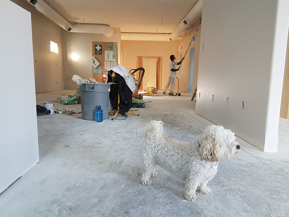 Close-up-Photography-of-White-Poodle-735319 Easy ways to remodel and renovate your home