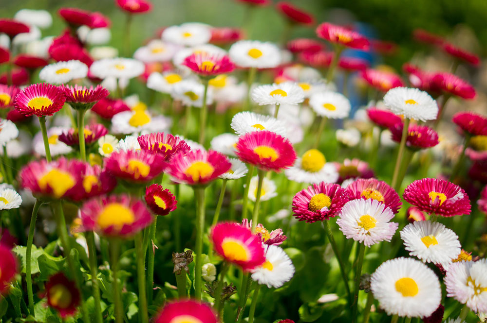 Flower-Garden-Colorful-Colorful Home Update - Create a sanctuary in your garden