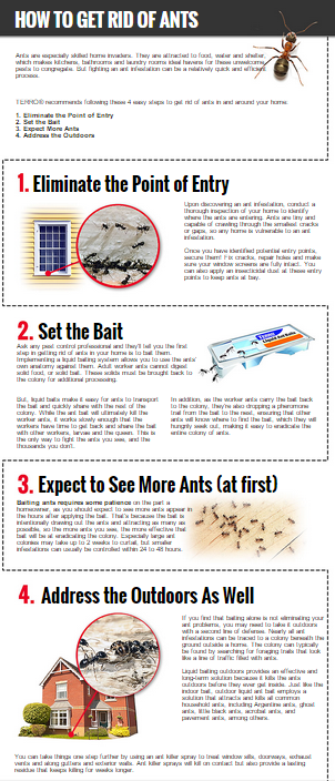 Ant problems? Check out our infographic for getting rid of them .