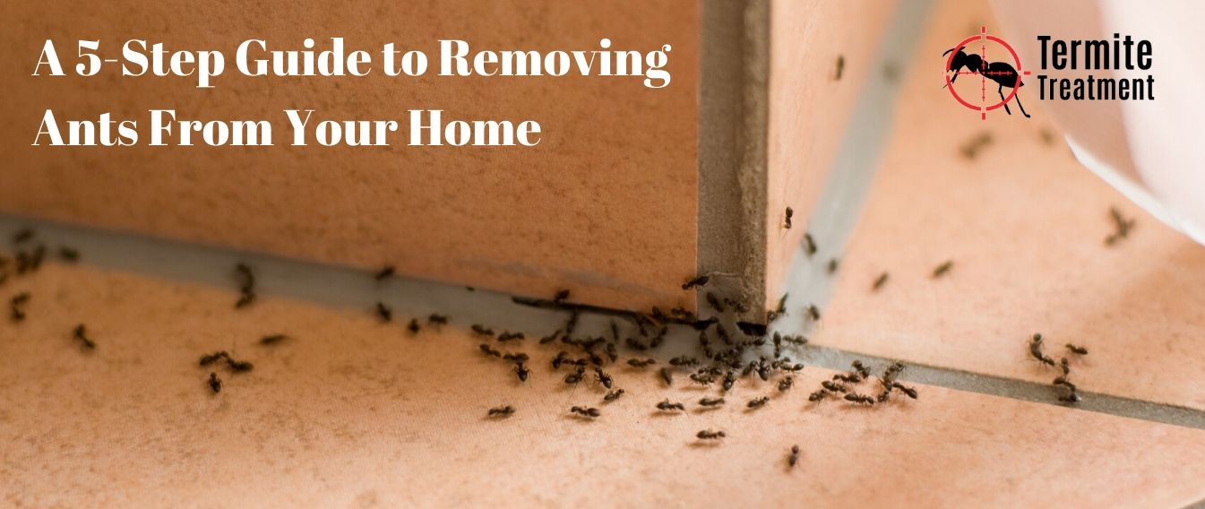 A step-by-step guide to removing ants   from your home