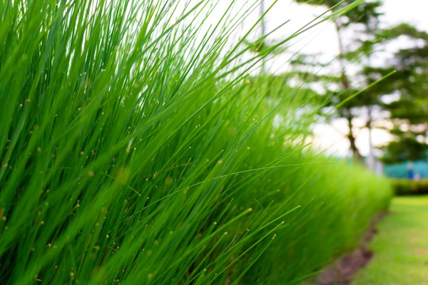 Select the Right Grass for Your Yard - Kwee Hus