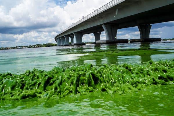 Benefits and Problems with Pond Algae   Kasco Mari