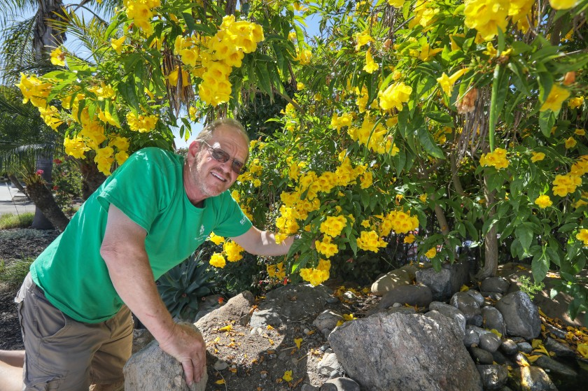 Summer blooms that can take the heat - The San Diego Union-Tribu