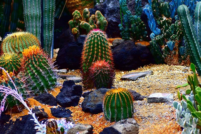 25 Beautiful Cactus Garden Ideas | Green and Vibra
