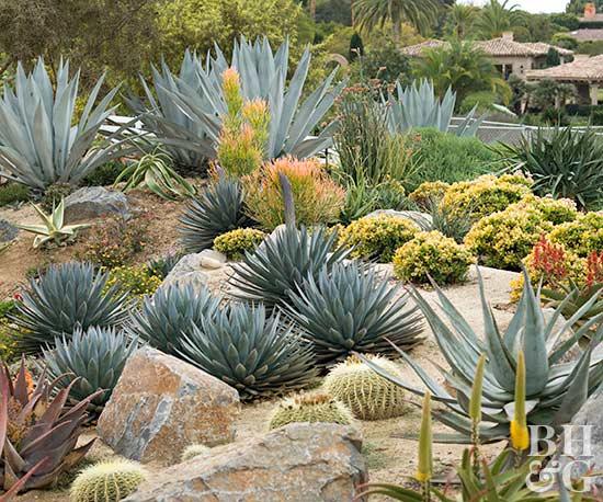 How to Start a Cactus Garden | Better Homes & Garde