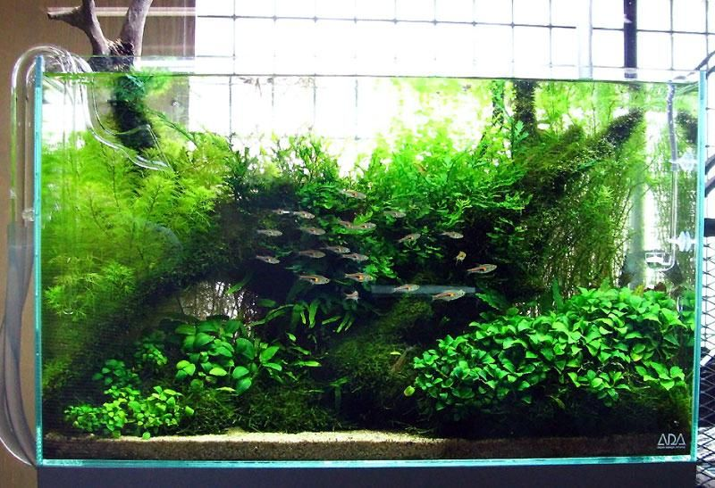 Freshwater Aquariums: Get to Know the Different Types of Aquatic .