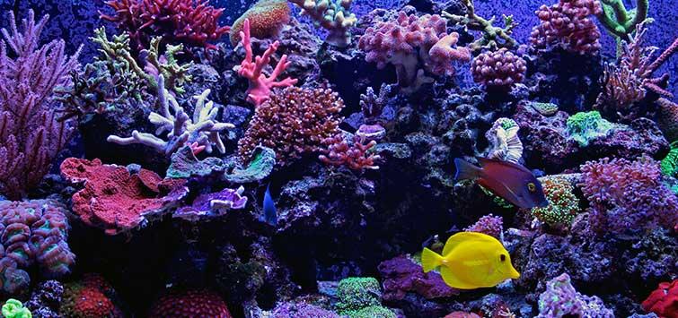 Saltwater Reef Tank Tips | Tropical Fish Hobbyist Magazi