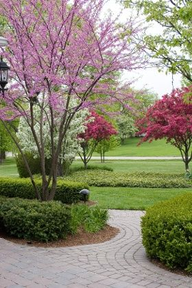 Top 10 Dwarf Ornamental Trees for the Landscape | Ornamental trees .