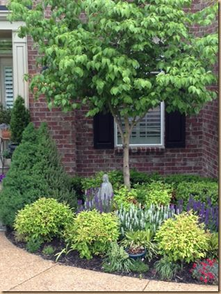 planting around small ornamental trees - Google Search | Evergreen .