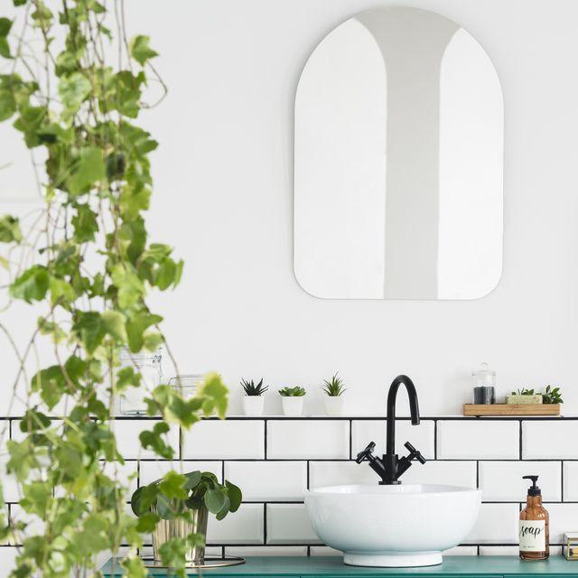 20 Best Bathroom Plants - High Humidity Plan
