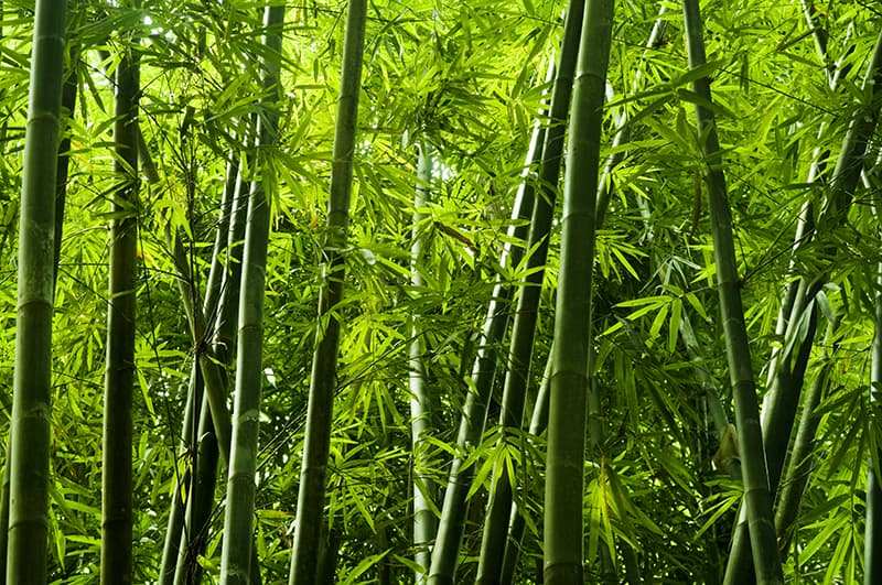 The different types of bamboo you should   know