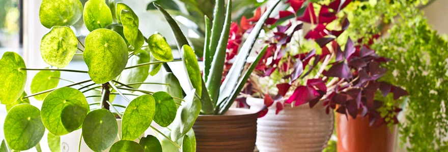 Seven benefits of having plants in your office - CIP