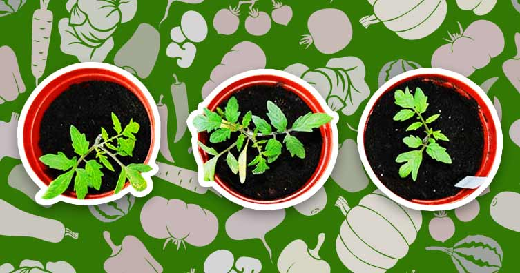 10 foods you can grow in your house or garden - Save the Stude
