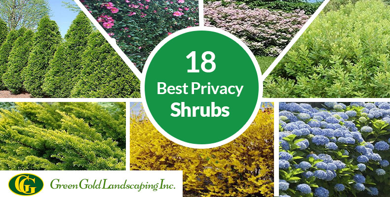 18 Best Privacy Shrubs and Fast Growing Privacy Plants You Don't Kn