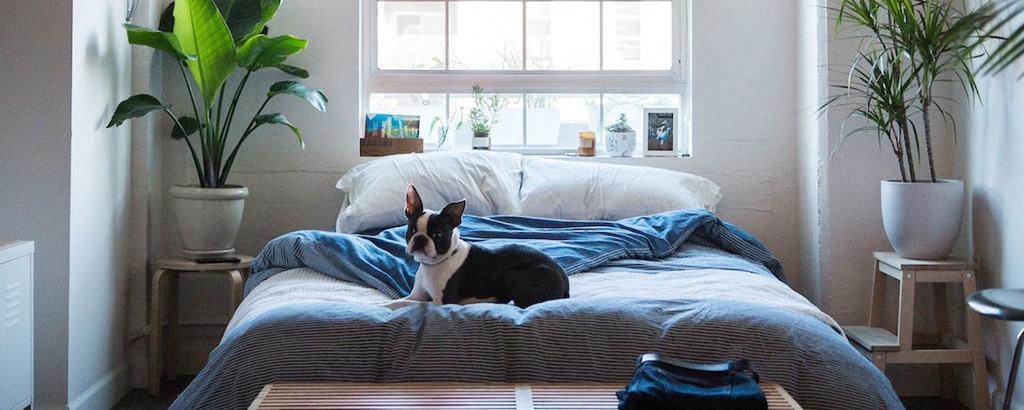 How to Arrange Bedroom Furniture | ApartmentGui